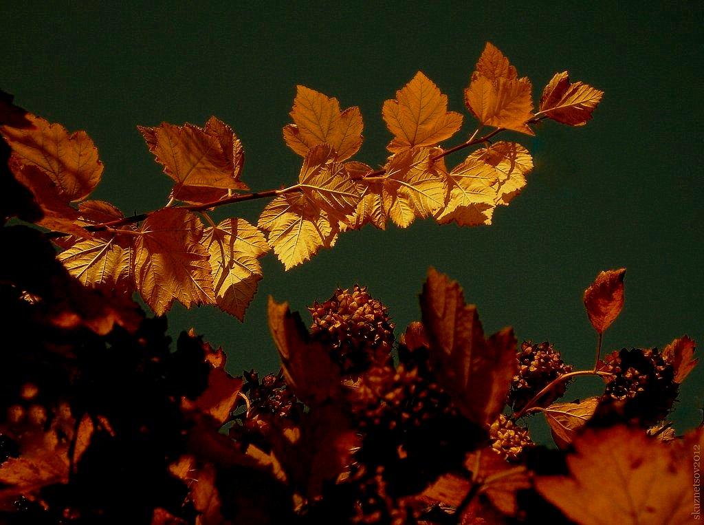 """фото """"Золотая Осень"""" метки: природа,"""