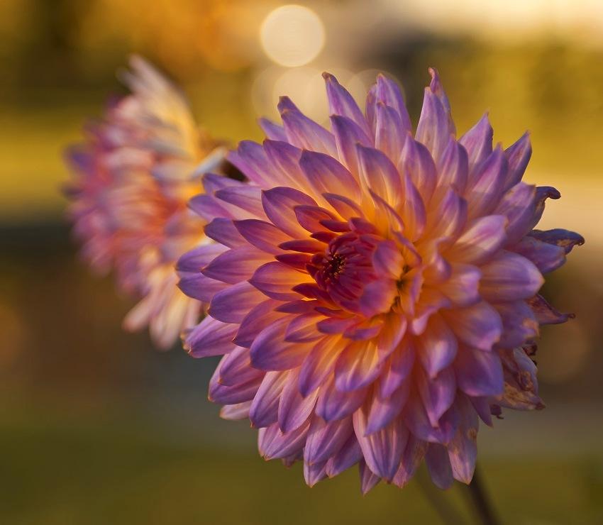 """фото """"Осенний цветок..."""" метки: природа, осень"""