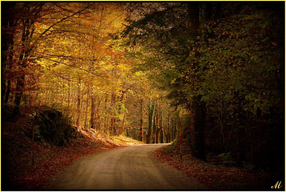 """фото """"Way to light"""" метки: пейзаж,"""