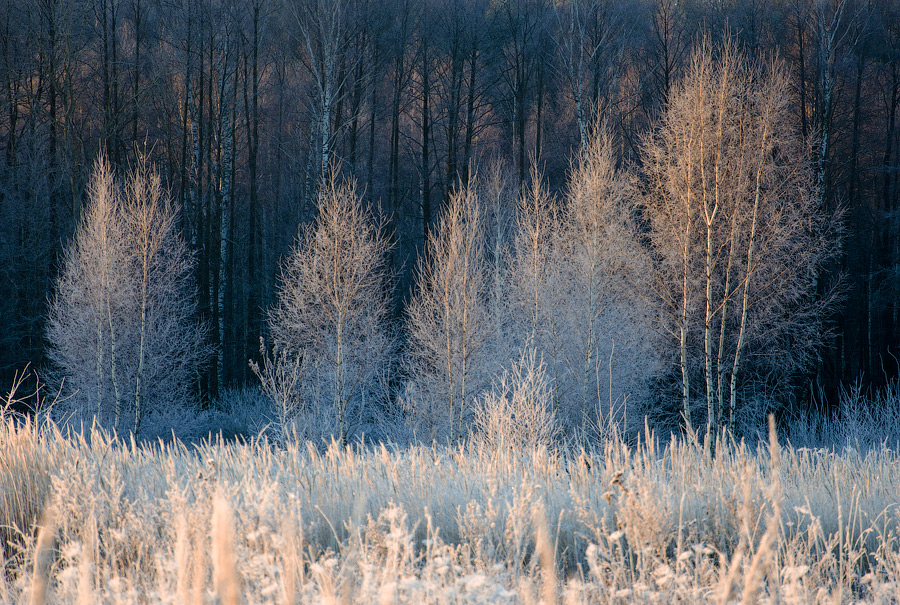 "photo ""***"" tags: landscape, forest, sun, winter, мороз"