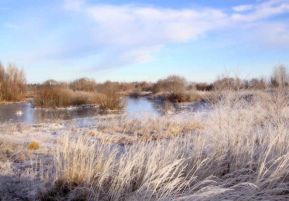 """фото """"Свежесть осеннего утра"""" метки: пейзаж, иней, лед, трава"""