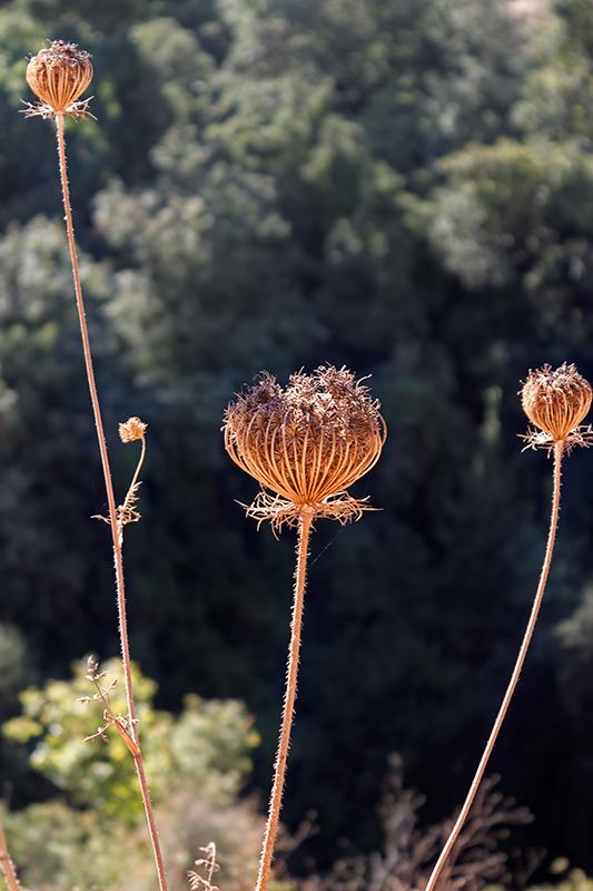 """фото """"***"""" метки: путешествия, природа, Голанские высоты, Израиль, национальный парк Баниас, сентябрь"""
