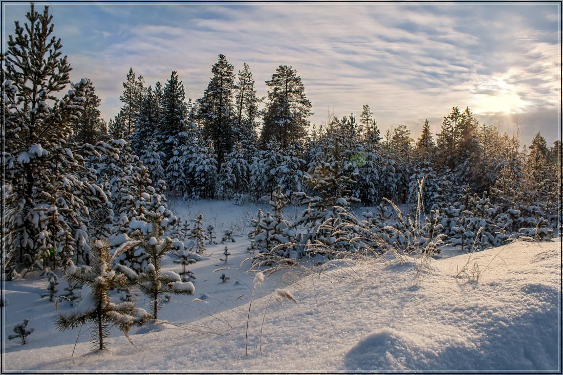 """фото """"Безветренный морозный день"""" метки: пейзаж, зима"""