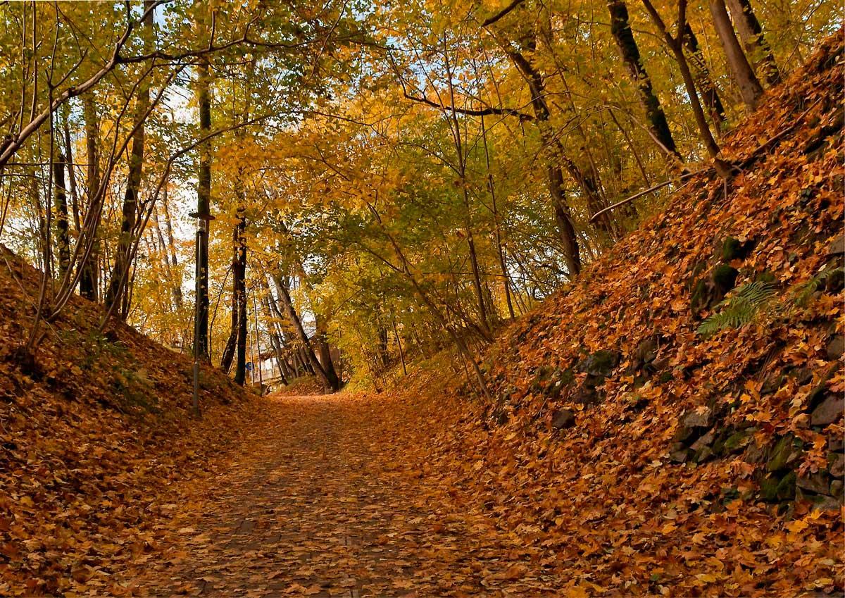 """фото """"Запах опавшей листвы..."""" метки: пейзаж, город, осень"""
