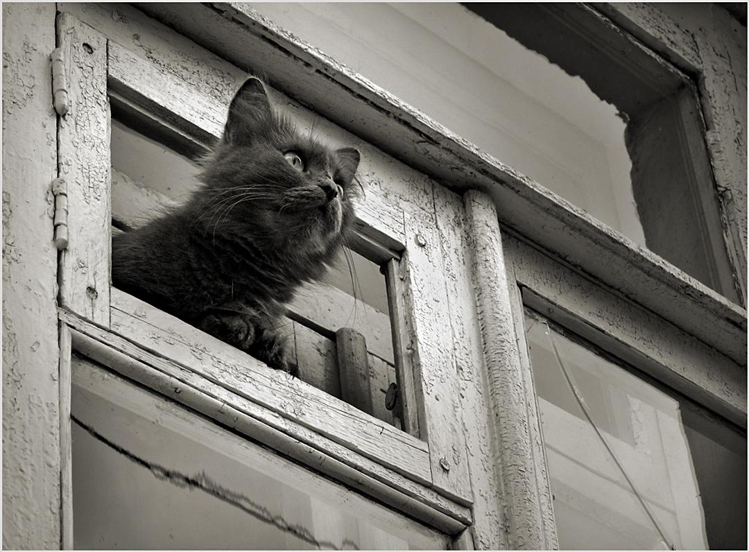 """фото """"Окно в мир"""" метки: природа, черно-белые,"""