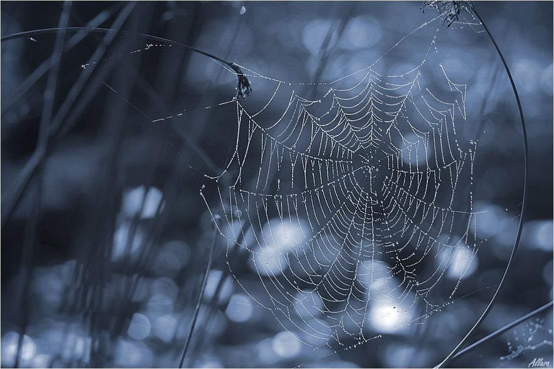 уже начиталась фото зимней паутинки значимый