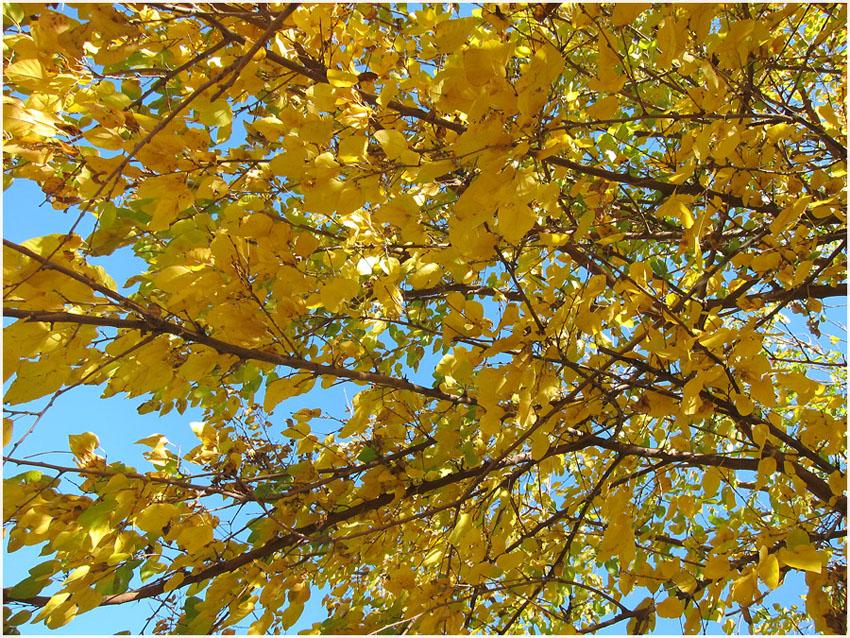 """фото """"Осенний сад"""" метки: пейзаж,"""