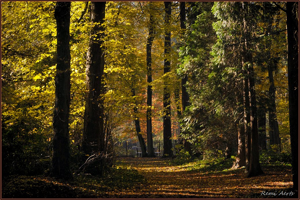 """фото """"***"""" метки: пейзаж, природа, лес, рассвет"""