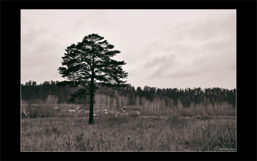 "photo ""Lonely Pine"" tags: landscape, black&white,"