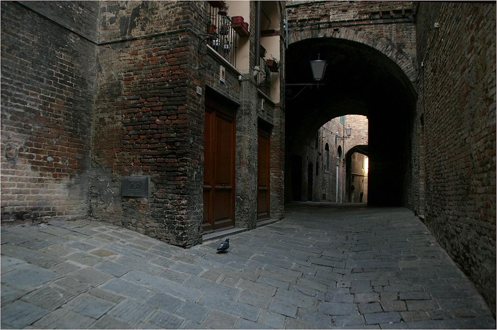 "фото ""Одинокий голубь"" метки: архитектура, город, стрит-фото,"