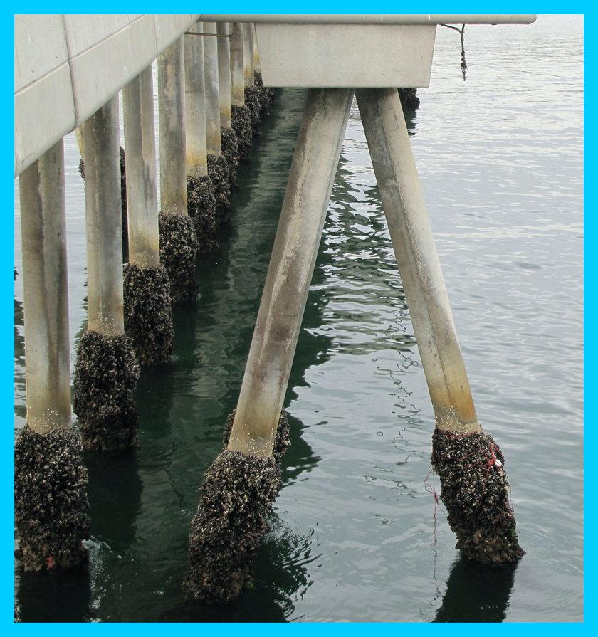 """фото """"****"""" метки: разное, архитектура, вода, море, мост"""
