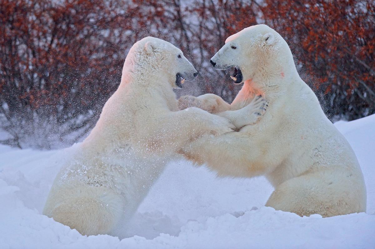 "фото ""Медвежьи забавы"" метки: природа,"