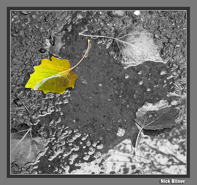 "photo ""Wet autumn"" tags: montage,"