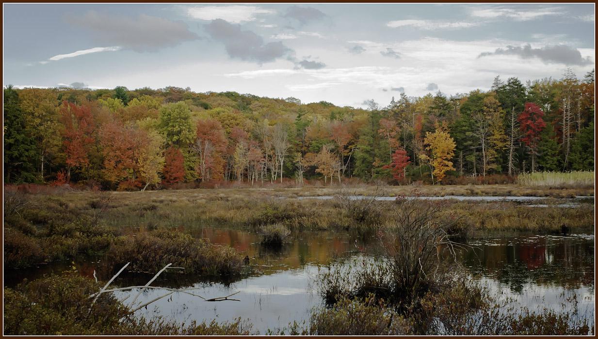 "фото ""Pine Swamp at Harriman State Park"" метки: пейзаж, природа, Harriman State Park, foliage, лес, облака, осень"