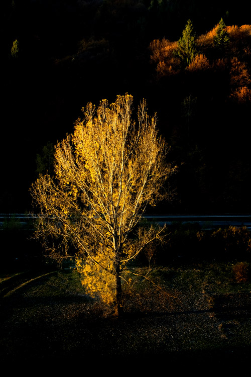 "photo ""yellow tree"" tags: landscape, genre, misc.,"