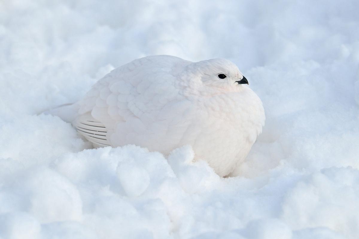 """фото """"White on the white"""" метки: природа,"""
