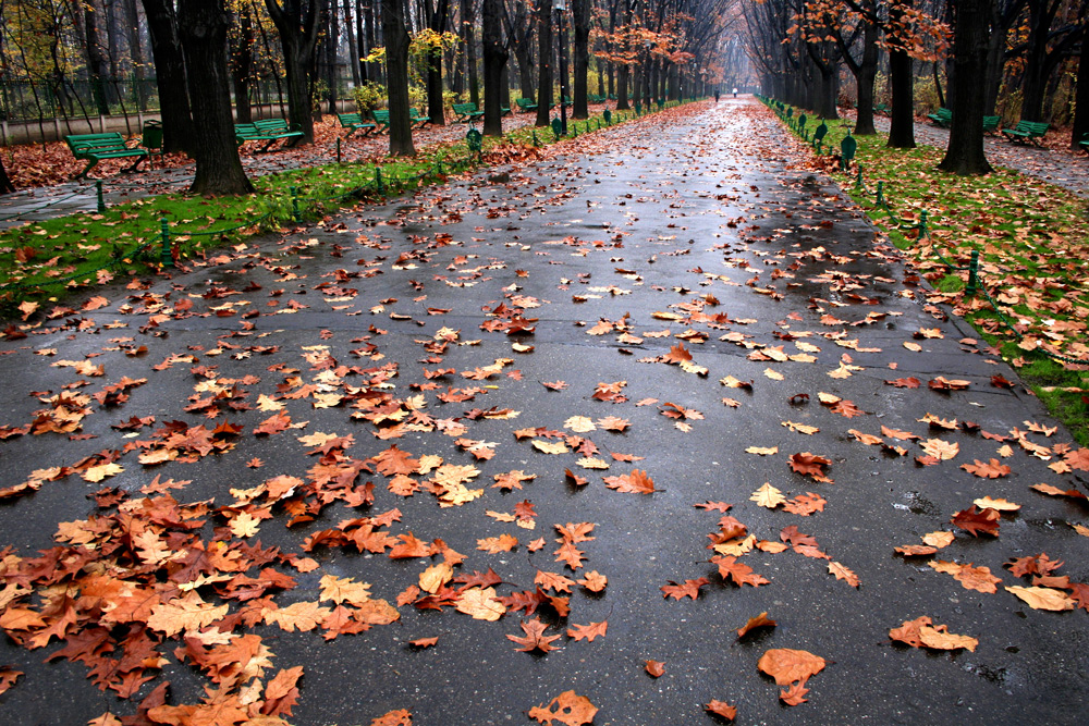 "photo ""Last representation"" tags: landscape, city, Bucharest, autumn, fall, leaves, parc, road, romania, trees"