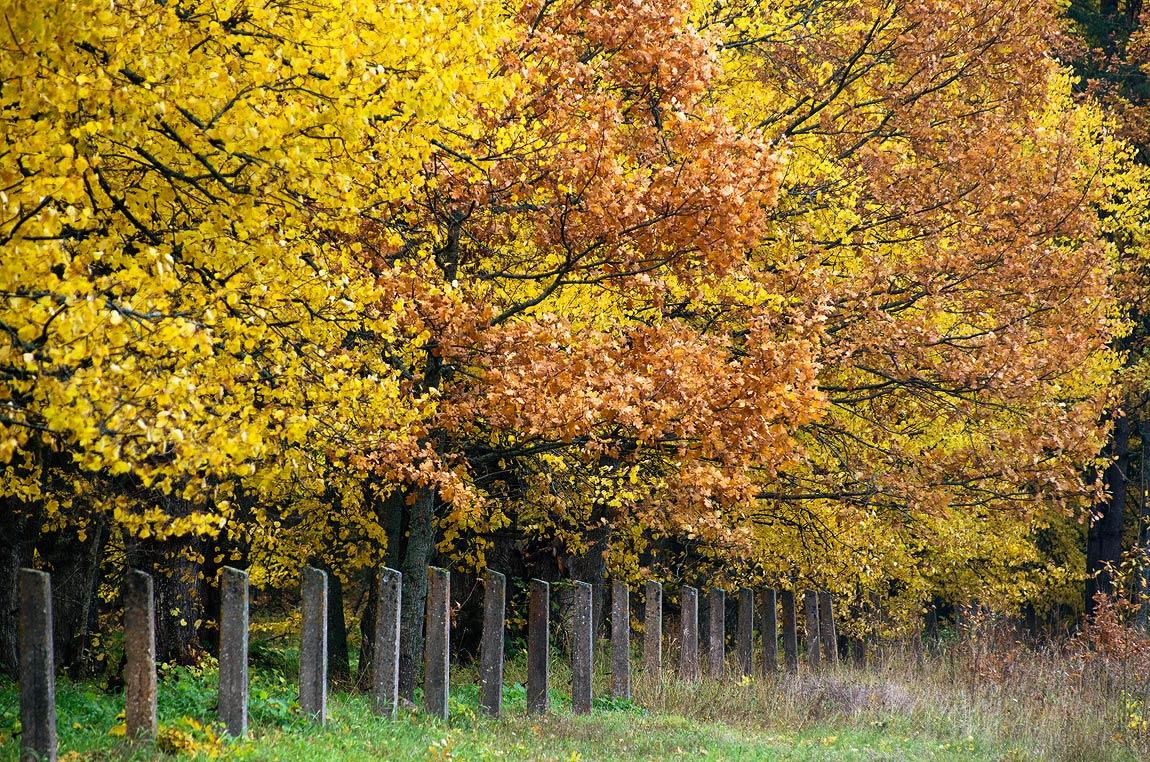 """фото """"считая октябрьские дни.."""" метки: пейзаж,"""