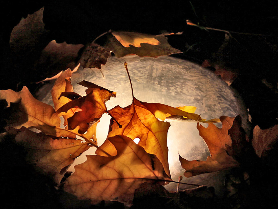 "фото ""Осенний ""пирог"""" метки: фрагмент, природа, вечер, осень"
