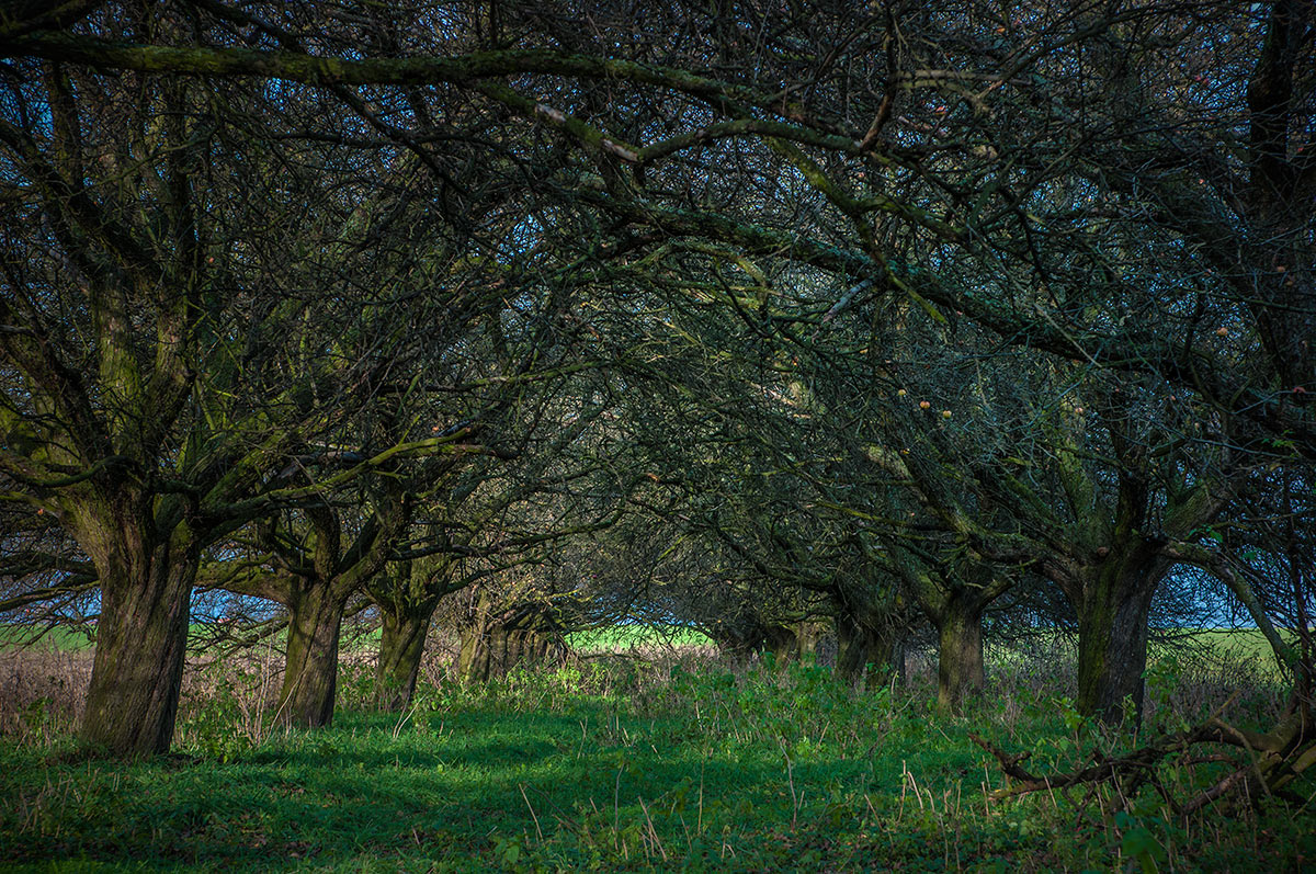 "photo ""appletrees"" tags: landscape,"
