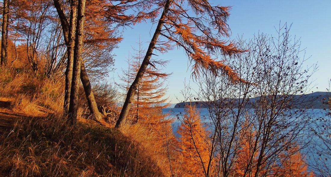 "фото ""Золото на лазурном..."" метки: пейзаж, деревья, лес, море, осень"
