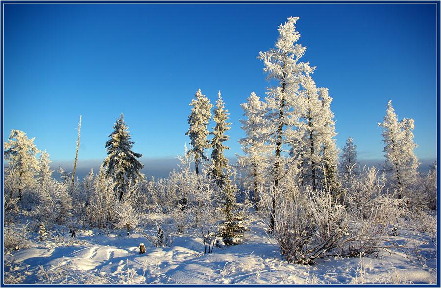 """фото """"Ноябрь Приполярья"""" метки: пейзаж, тайга зима Якутия"""