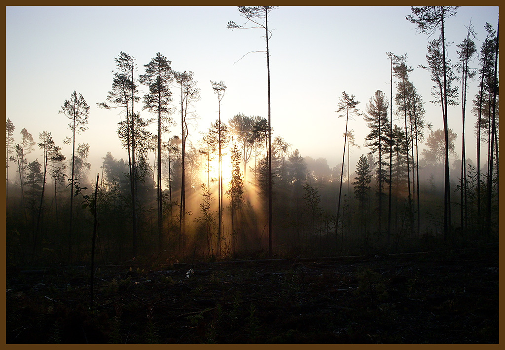 "фото ""Глазами охотника"" метки: пейзаж, лес"