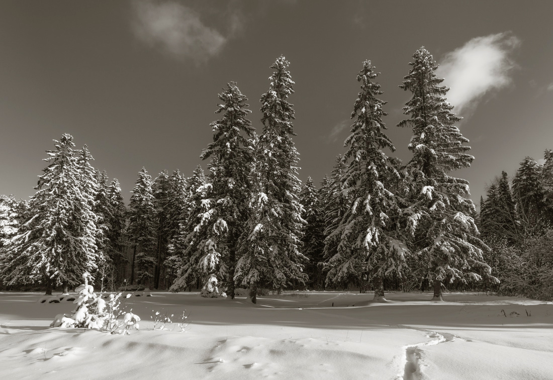 "photo ""***"" tags: landscape, clouds, forest, snow, winter, елки, сгробы, тропинки"