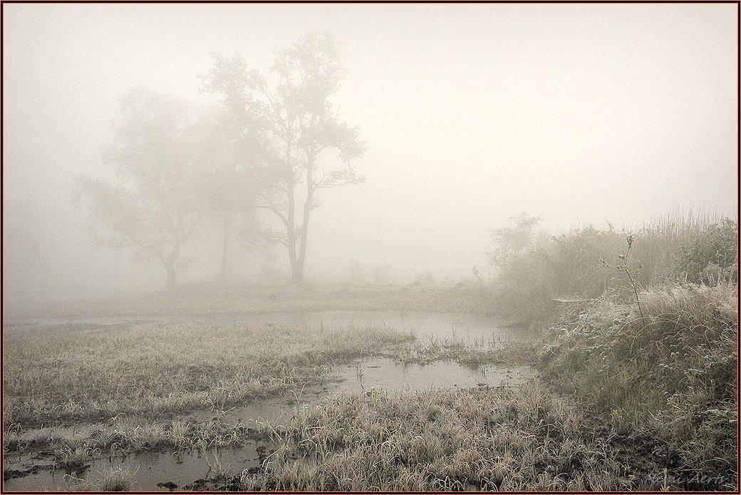 """фото """"***"""" метки: пейзаж, природа, лес, туман"""