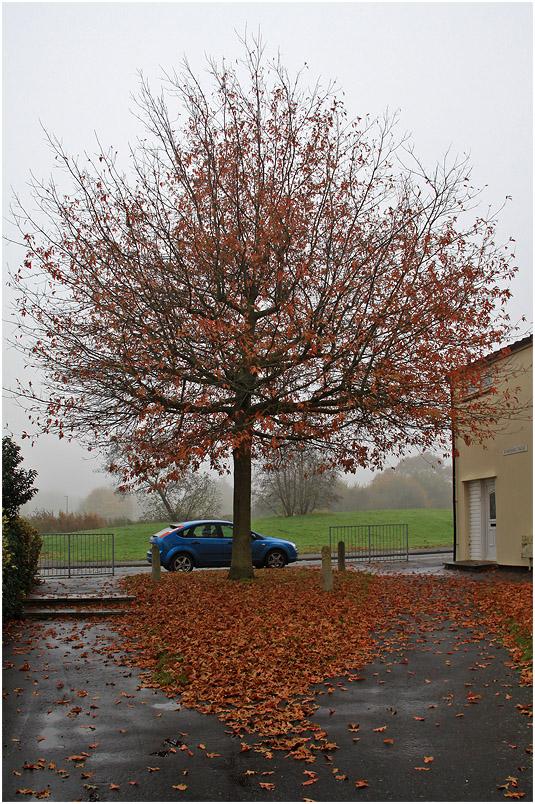 """фото """"Осень.  Графика ноября."""" метки: пейзаж, город, дерева, дерево, ноябрь, осень, туман"""
