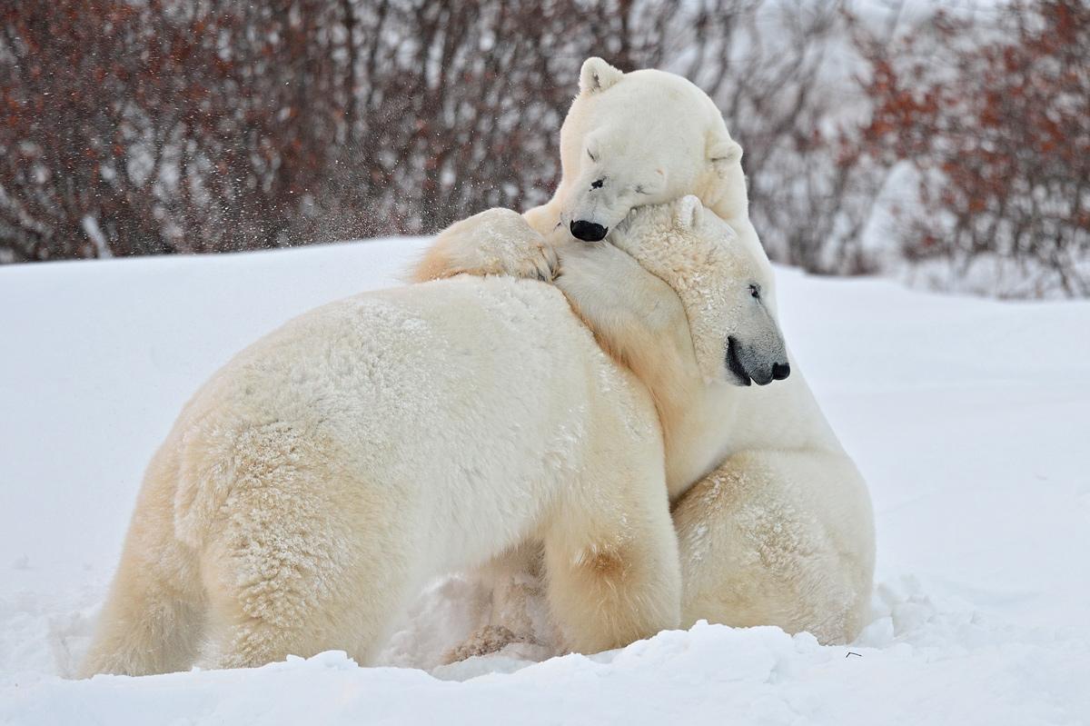 """фото """"Потому, что я люблю тебя...:)"""" метки: природа,"""