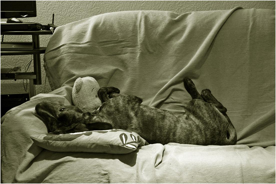 """фото """"Приемыш."""" метки: природа, черно-белые, домашние животные, собака"""