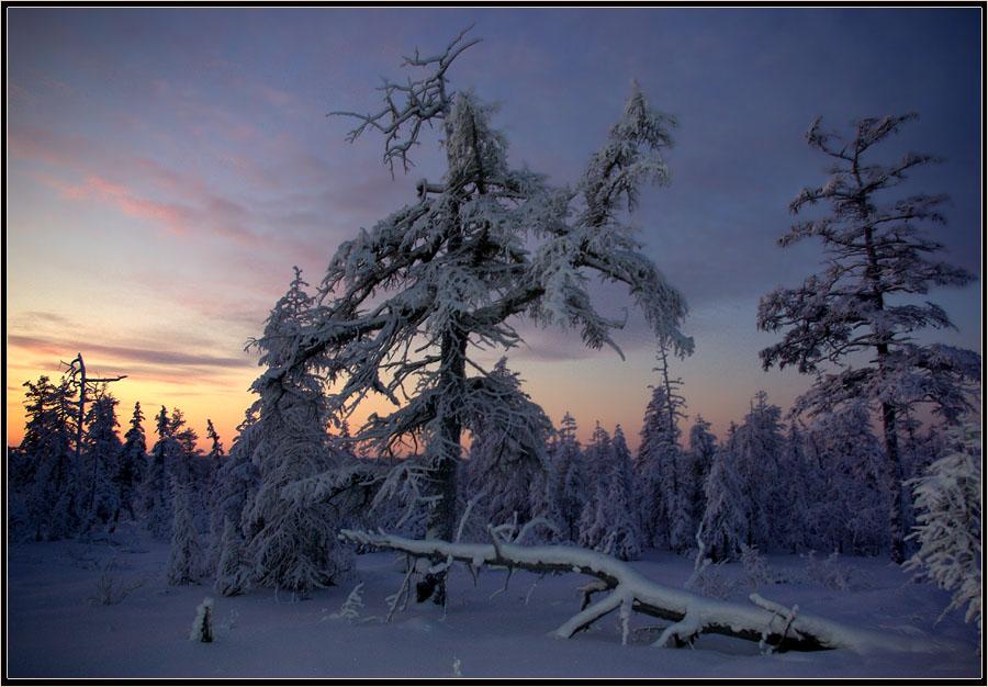 """фото """"Зимнее утро"""" метки: пейзаж, тайга зима рассвет Якутия"""