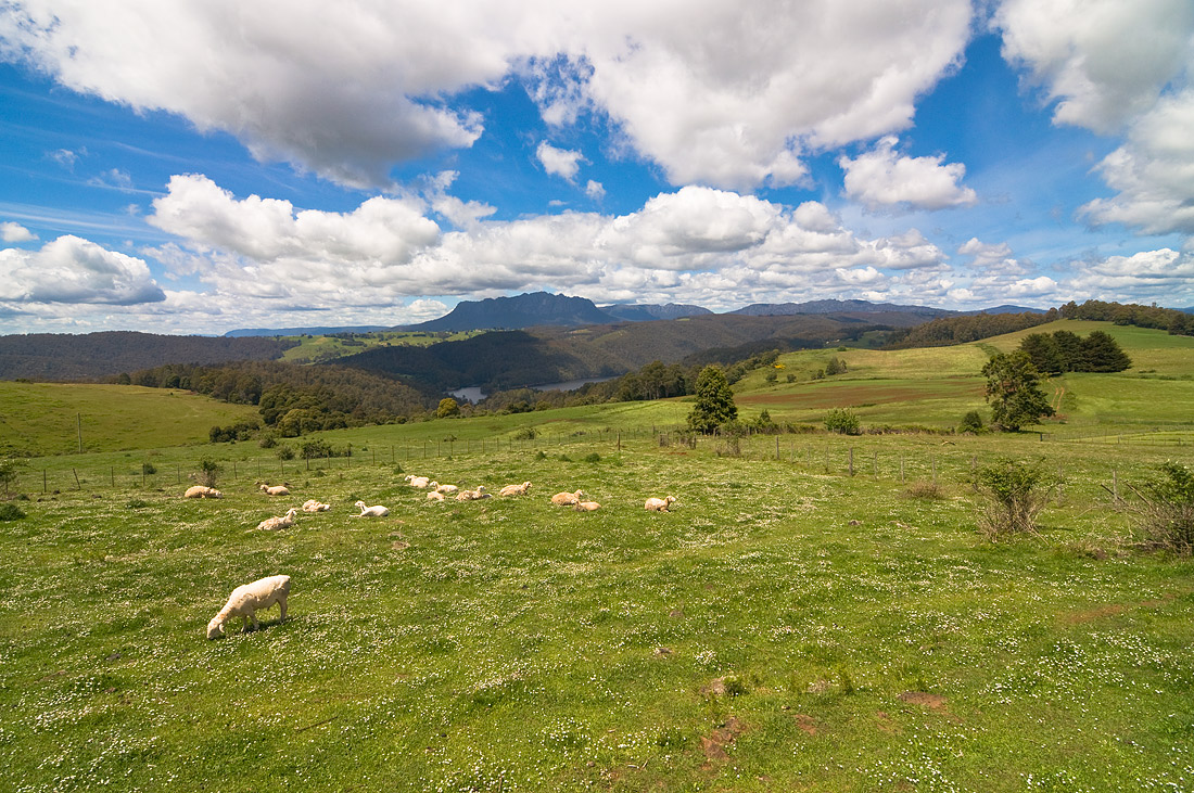 "photo ""Highlands of Tasmania"" tags: landscape, clouds, flowers, grass, hills, mountains, sheep, sky"