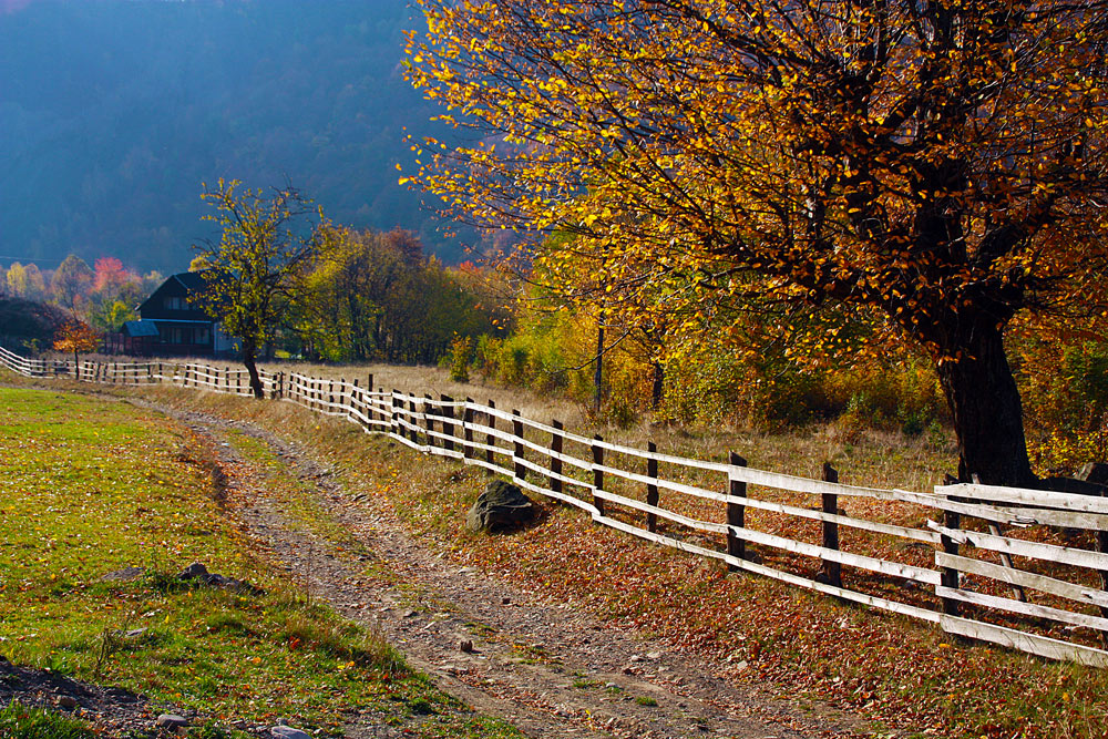 "фото ""Road to village"" метки: пейзаж, природа, fall, forest, leaves, road, romania, trees, yellow, осень"