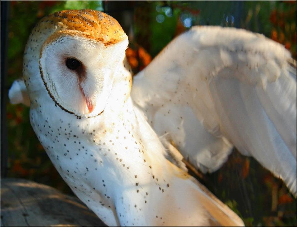 """фото """"Spread Your Wings"""" метки: природа,"""