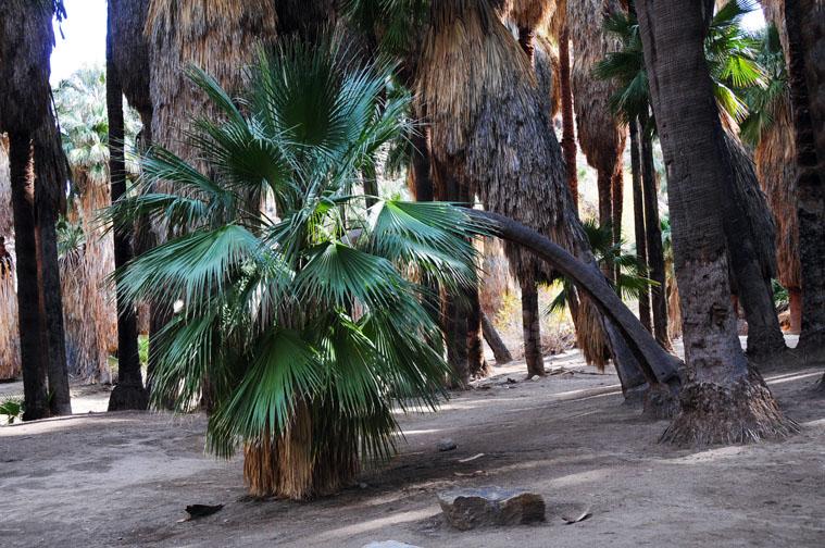 """фото """"Palm Springs ca"""" метки: пейзаж,"""