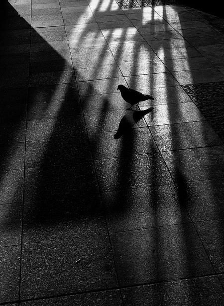 "photo ""Света, тени и голубь"" tags: black&white, Prague"