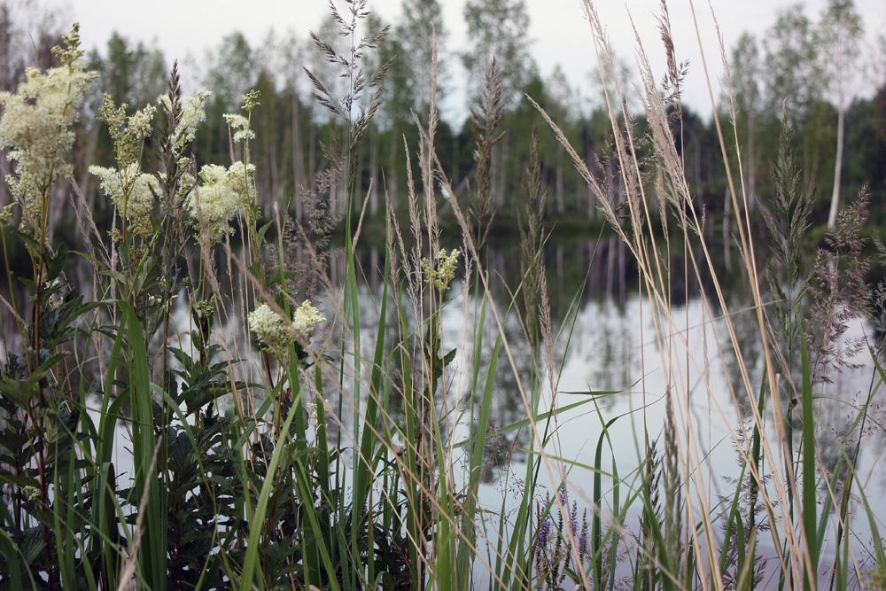 """фото """"Травы, травы, травы..."""" метки: природа,"""