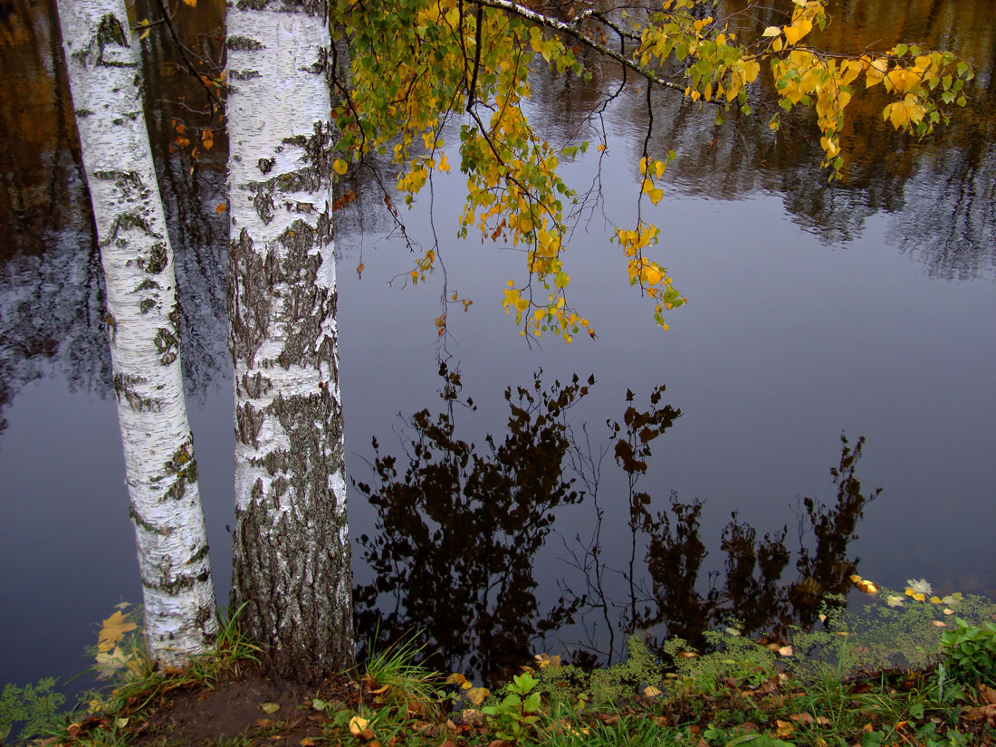 "photo ""... for Two.."" tags: landscape, autumn, birches, lake, Болдино"
