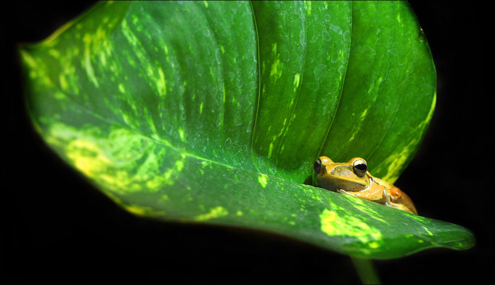 "photo ""frog"" tags: macro and close-up,"