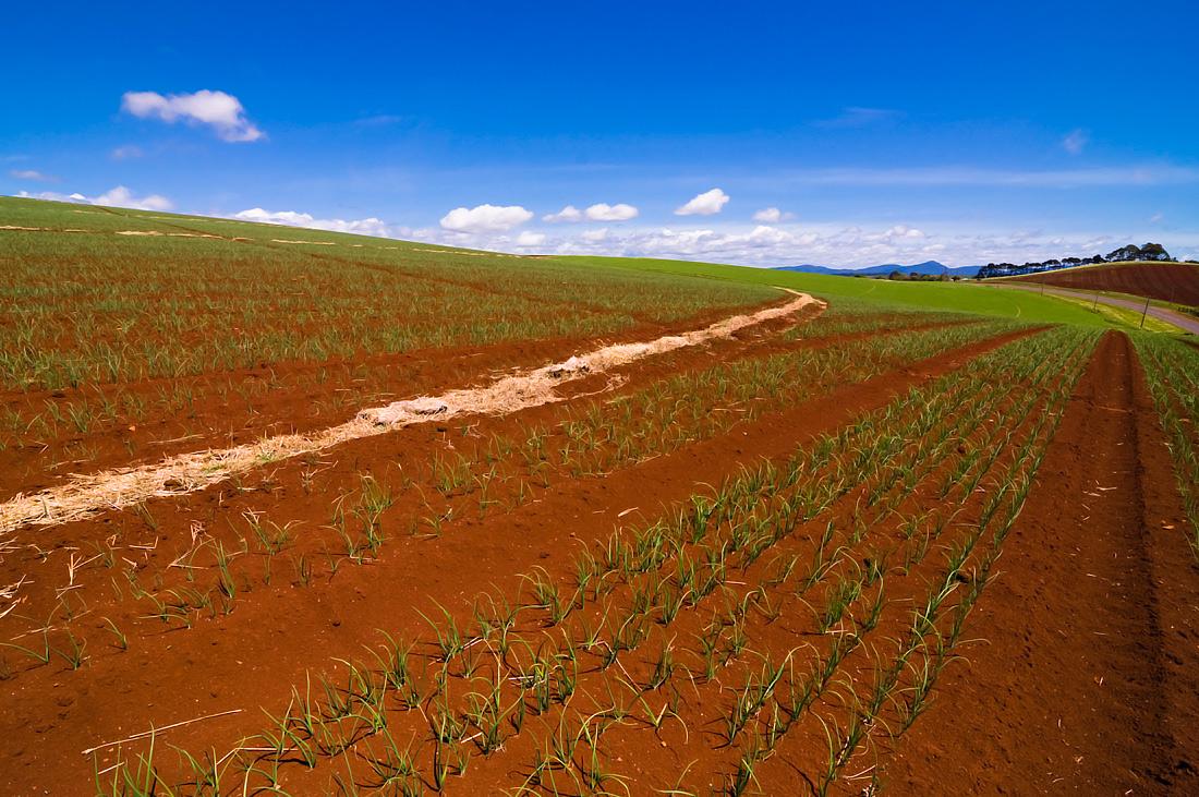 "фото ""Future harvest"" метки: пейзаж, field, green, harvest, summer, горы, небо, облака"