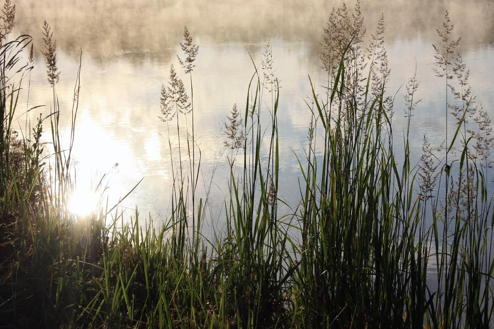 """фото """"Почти Вивальди..."""" метки: пейзаж, природа, вода, лето"""