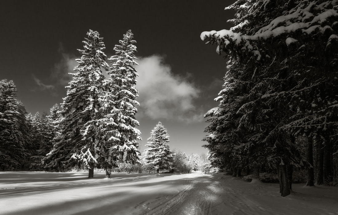 "photo ""***"" tags: landscape, black&white, clouds, forest, sky, snow, sun, winter, елки, мороз, тропинки"