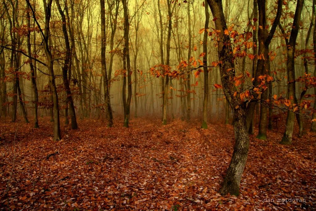 "фото ""padure toamna"" метки: пейзаж,"