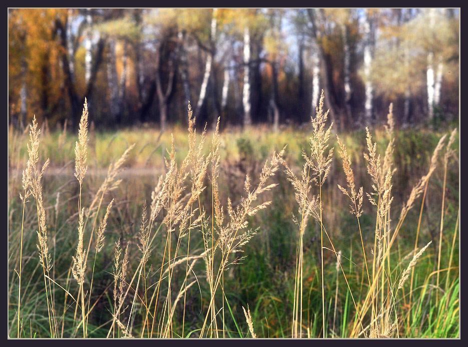 """фото """"Осенний этюд"""" метки: природа,"""