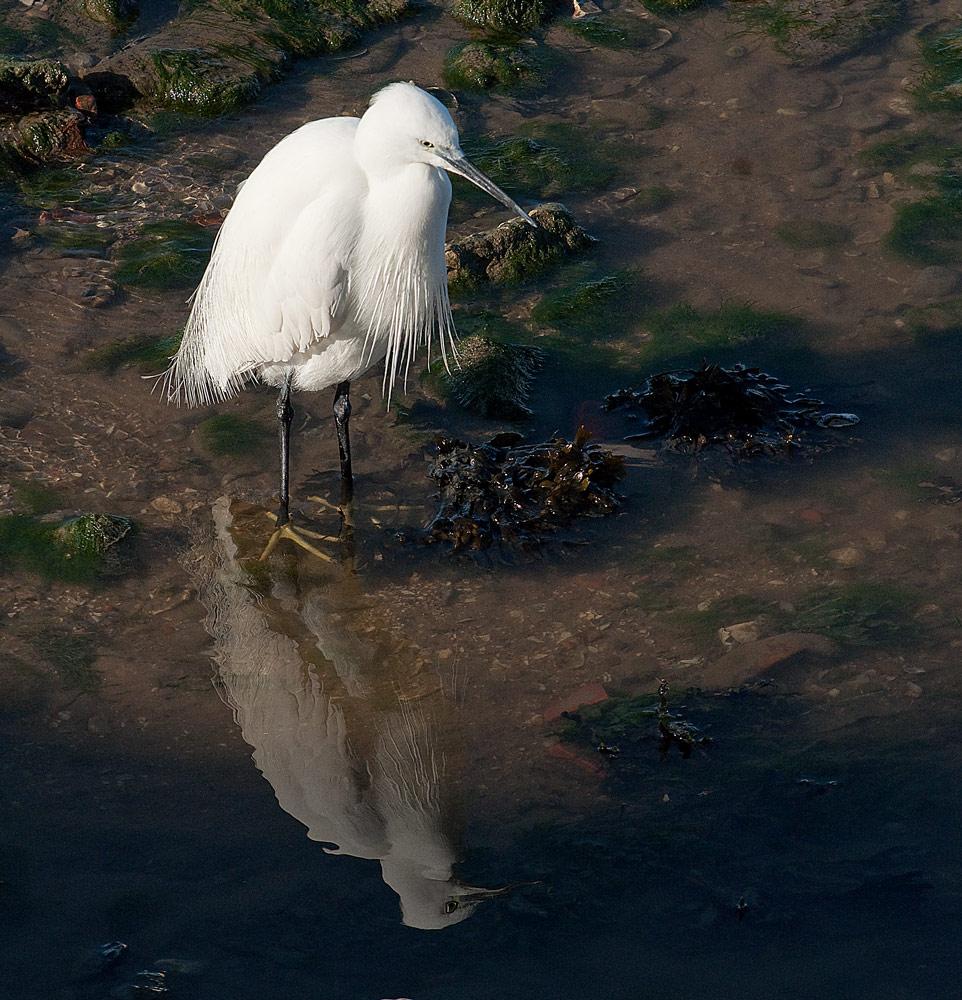 "фото ""Low Tide"" метки: природа, Tagus, Tejo, animals, birds, estuary, Европа, Португалия, вода, река"