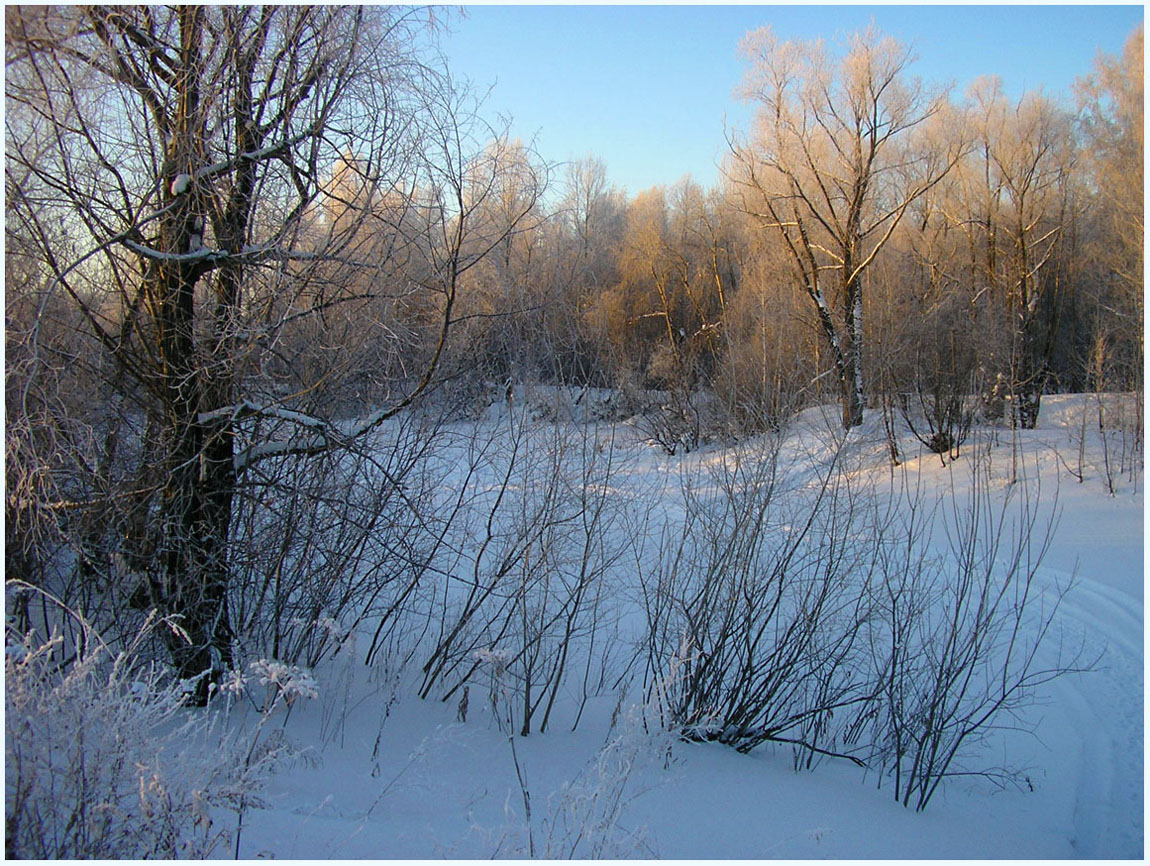 "фото ""Зима"" метки: пейзаж, зима, лес"