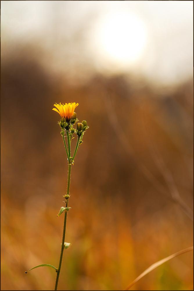 """фото """"Все живое тянется к солнцу...."""" метки: природа, пейзаж, лес, лист, поле, солнце"""