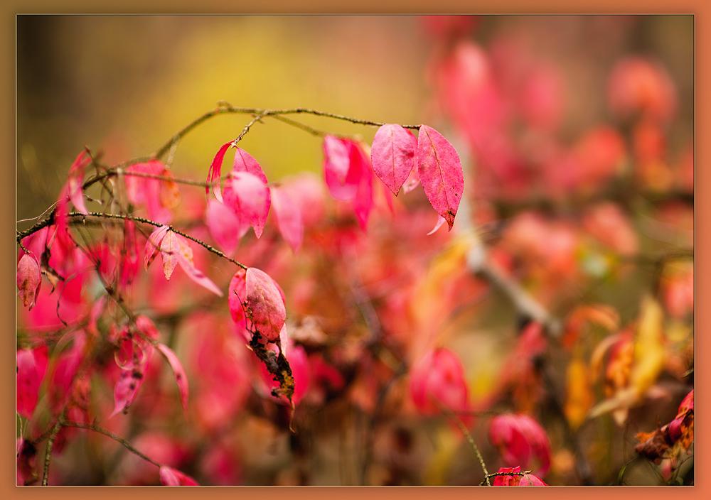 """фото """"Кусочек с цветами осени...."""" метки: пейзаж, природа, лес, лист, осень, поле, солнце"""
